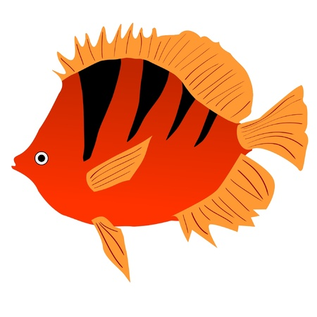 One colored illustration of a tropical fish Vector