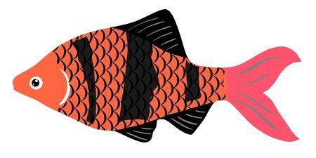 One colored illustration of a aquarium fish Stock Vector - 11611510