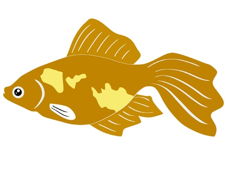 One colored illustration of a tropical fish Stock Vector - 11611507