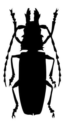 entomologist: One illustration of the silhouette of giant beetle