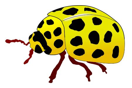 stick insect: One coroured illustration of the of yellow ladybird