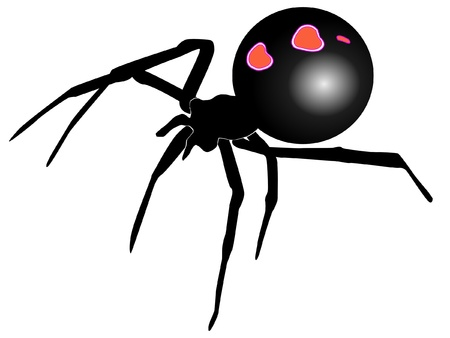 poisonous insect: A colored illustration of insect serie. Black widow