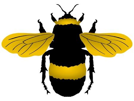 wesp: Een gekleurde illustratie van insect serie. Hommel Stock Illustratie