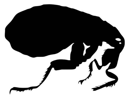 flea: Una ilustraci�n en color de insectos serie. Pulga