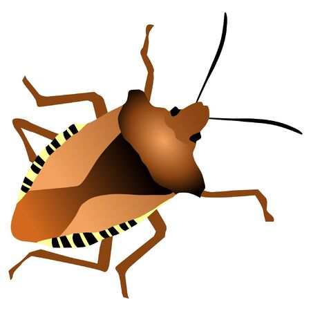 bedbug: A colored illustration with an insect. Forest bug