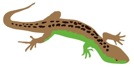 A colored illustration of serie of reptiles. Lizard