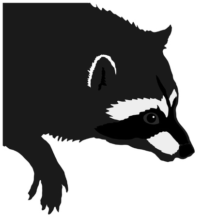 serie: a black silhouette of serie of animals, raccoon