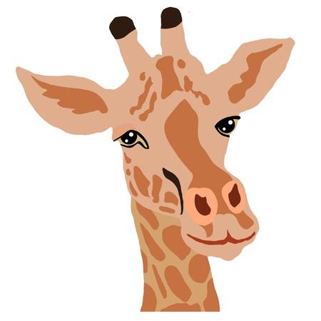 jirafa fondo blanco: una ilustración en color de serie de los animales, la jirafa