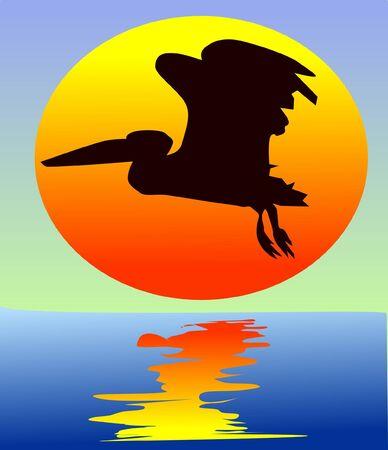 pelican: pelican on sunset Illustration