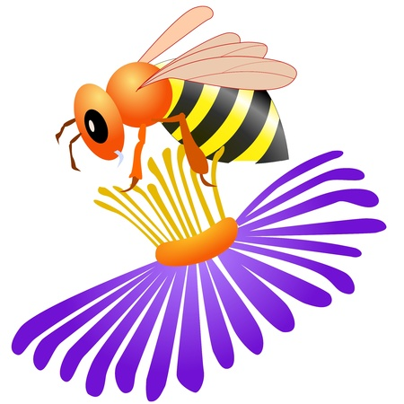 Colored illustration of bee on white background Vector