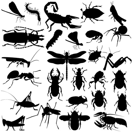 Big set of different insects and spiders Vector