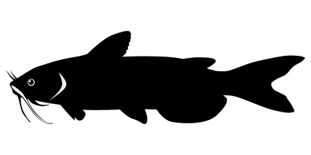 silhouette of the catfish on white background Vector