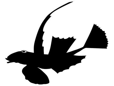 dragonet: silhouette of the lesser dragonet on white background