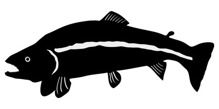 silhouette of the trout on white background