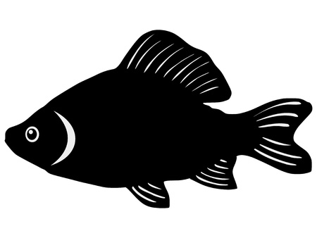 crucian: silhouette of the crucian on white background