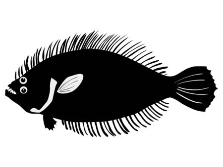 flounder: silhouette of the flounder on white background