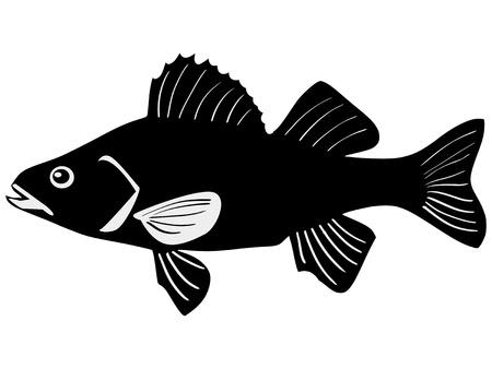 민물의: 흰색 배경에 농어의 실루엣 일러스트
