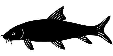 barbel: silhouette of the barbel on white background