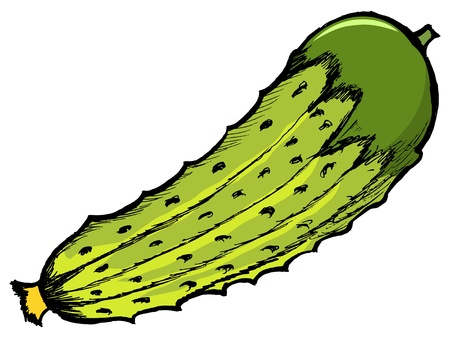 Illustration of a cucumber on white background Vector