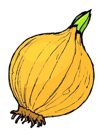 hand drawn cartoon: Dibujado a mano, ilustraci�n de dibujos animados de la cebolla Vectores