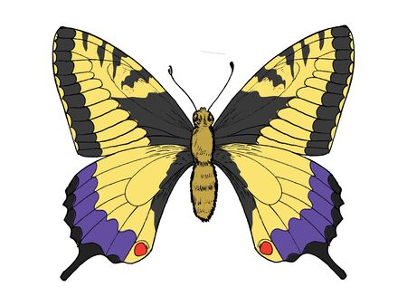 Hand drawn, sketch, illustration of swallowtail butterfly Vector