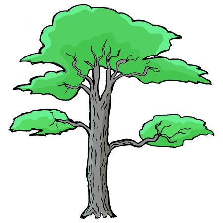 greenwood: Hand drawn, vector, cartoon illustration of acacia