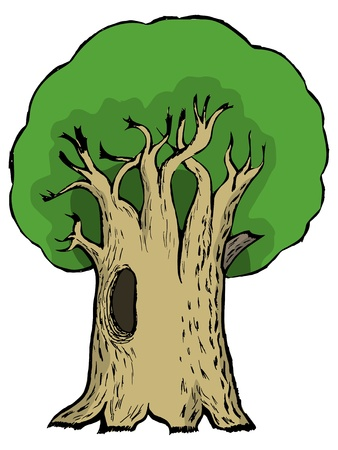 Hand drawn, vector, cartoon illustration of oak Vector