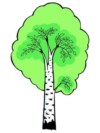 Hand drawn,cartoon illustration of birch