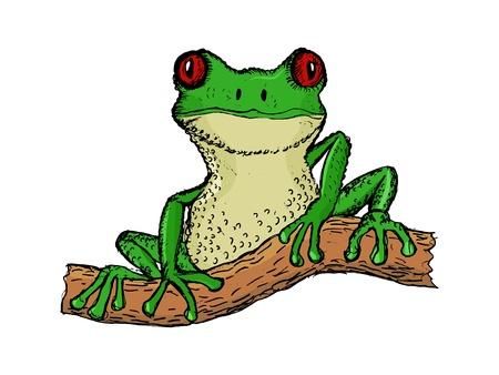 hand drawn cartoon: dibujado a mano, ilustraci�n de la historieta de la rana de �rbol
