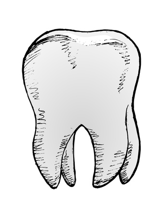 hand drawn, vector, sketch illustration of tooth Vector