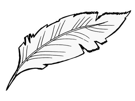 Hand getrokken, schets illustratie van veren