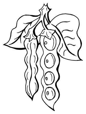 Hand drawn, vector, cartoon illustration of peas Stock Vector - 18145950
