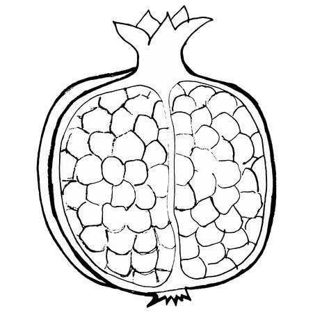Hand drawn, vector, cartoon illustration of pomegranate Stock Vector - 18145910