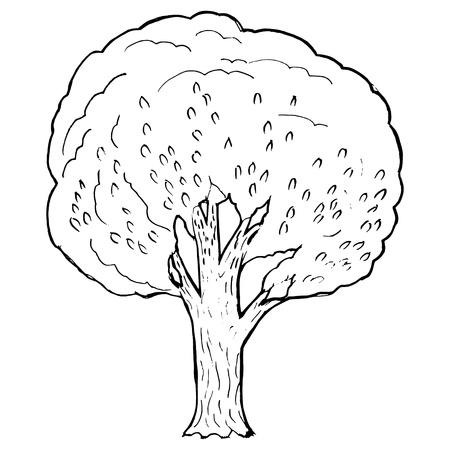 poplar: Hand drawn, vector, cartoon illustration of poplar