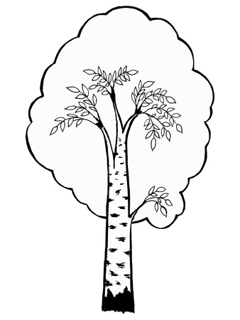 Hand drawn, vector, cartoon illustration of birch Ilustracja