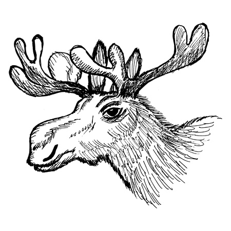 hand drawn, cartoon, sketch illustration of moose Vector