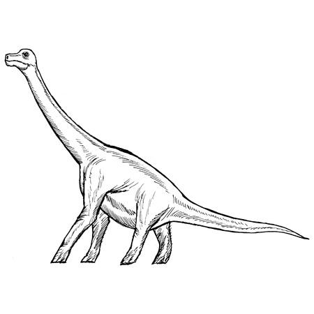 brachiosaurus: hand drawn, sketch illustration of brachiosaurus