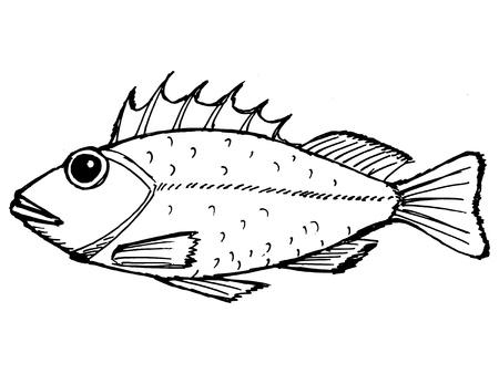 hand drawn, cartoon, sketch illustration of rockfish