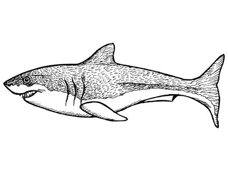 man eater: hand drawn, sketch, cartoon illustration of shark
