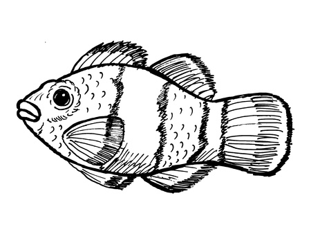 nemo: hand drawn, sketch, cartoon illustration of clown fish