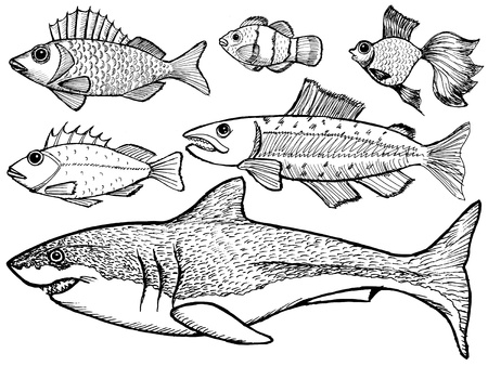 set of sketch illustration of kinds of the fish Stock Vector - 20044108