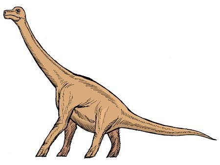 brachiosaurus: hand drawn, vector, sketch illustration of brachiosaurus