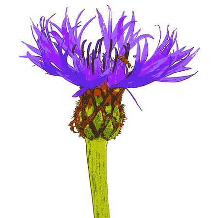 traced: photorealistic, vector, traced illustration of a field flower