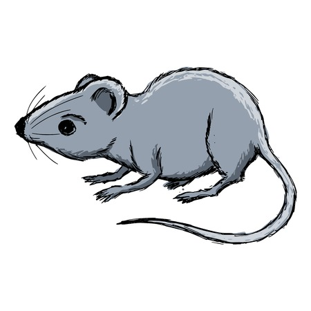 house mouse: hand drawn, cartoon, sketch illustration of house mouse