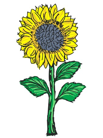 hand drawn, sketch, cartoon illustration of sunflower Vector