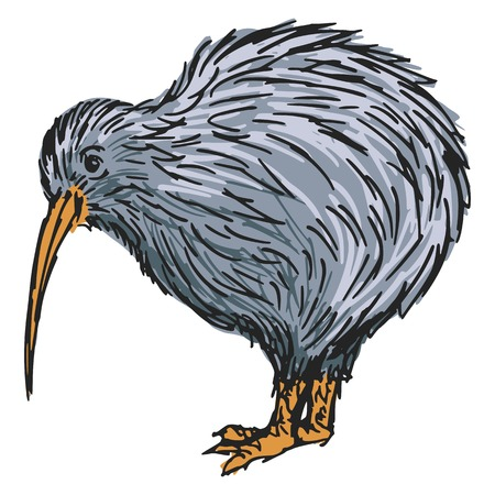 hand drawn, sketch, cartoon illustration of kiwi