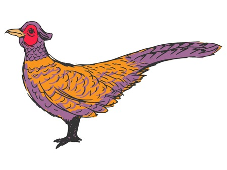 wildlife shooting: hand drawn, sketch, cartoon illustration of pheasant