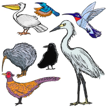 set of sketch illustrations of the birds Vector