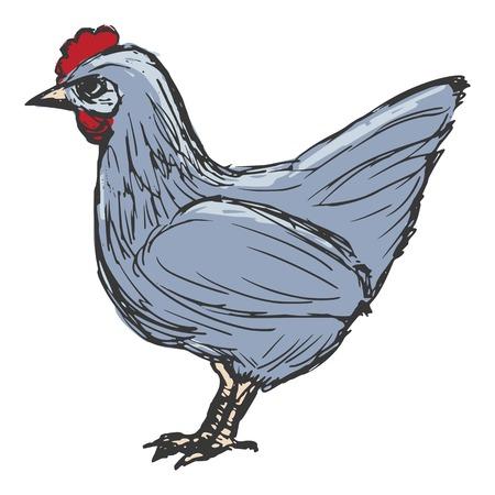 hand drawn cartoon: dibujados a mano, dibujos animados, ilustraci�n boceto de gallina Vectores