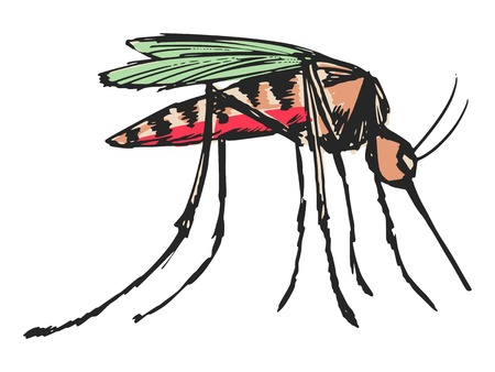 dipterus: hand drawn, sketch, cartoon illustration of mosquito
